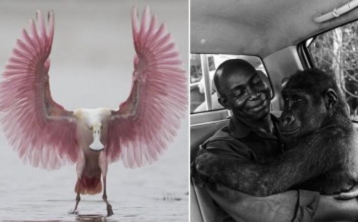 23 das melhores fotos da vida selvagem que podem nos levar as lágrimas
