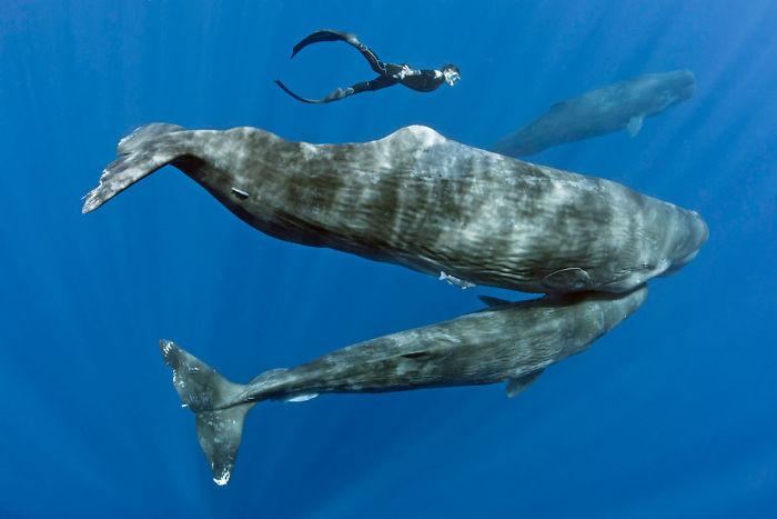 Imagens exclusivas de baleias dormindo!
