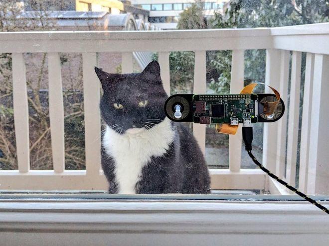 Engenheiro usa reconhecimento facial para ajudar seu gato a entrar em casa